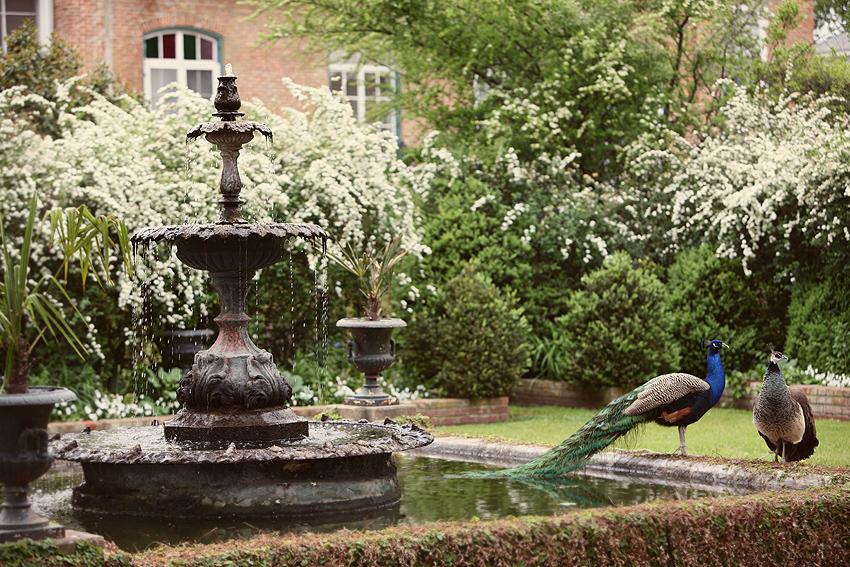 e_j_peacock_garden1
